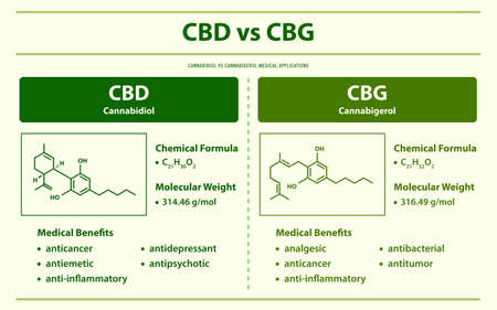CBD vs CBG, Cannabidiol vs Cannabigerol horizontal infographic illustration about cannabis as herbal alternative medicine and chemical therapy, healthcare and medical science vector.