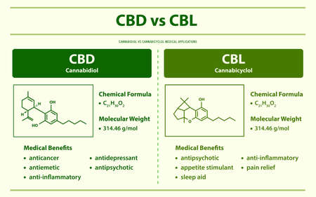 CBD vs CBL, Cannabidiol vs Cannabicyclol horizontal infographic illustration about cannabis as herbal alternative medicine and chemical therapy, healthcare and medical science vector.