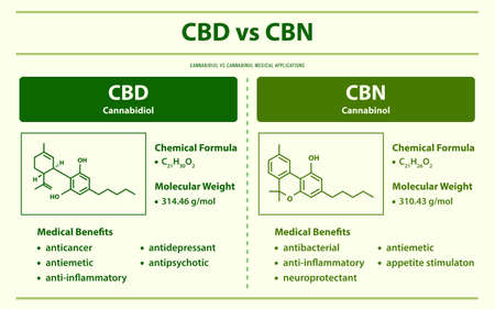 CBD vs CBN, Cannabidiol vs Cannabinol horizontal infographic illustration about cannabis as herbal alternative medicine and chemical therapy, healthcare and medical science vector. Ilustração