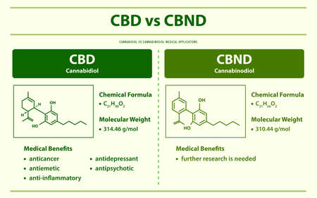 CBD vs CBND, Cannabidiol vs Cannabinodiol horizontal infographic illustration about cannabis as herbal alternative medicine and chemical therapy, healthcare and medical science vector.