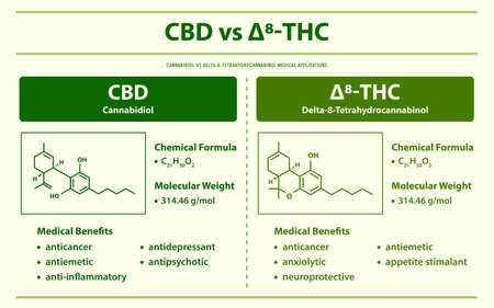 CBD vs ∆8-THC, Cannabidiol vs Delta 8 Tetrahydrocannabinol horizontal infographic illustration about cannabis as herbal alternative medicine and chemical therapy, healthcare and medical science vector.