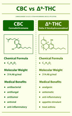 CBC vs ∆9-THC, Cannabichromene vs Delta 9 Tetrahydrocannabinol vertical infographic illustration about cannabis as herbal alternative medicine and chemical therapy, healthcare and medical science vector. Ilustração