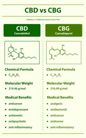 CBD vs CBG, Cannabidiol vs Cannabigerol vertical infographic illustration about cannabis as herbal alternative medicine and chemical therapy, healthcare and medical science vector.