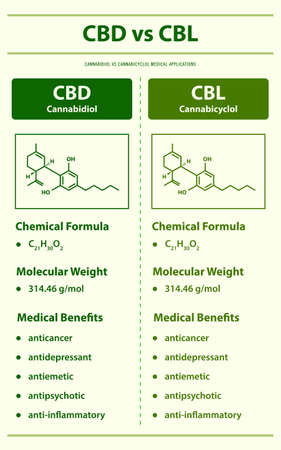 CBD vs CBL, Cannabidiol vs Cannabicyclol vertical infographic illustration about cannabis as herbal alternative medicine and chemical therapy, healthcare and medical science vector.