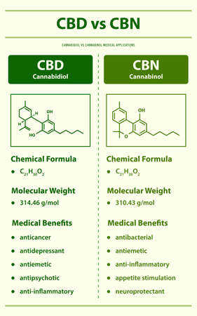 CBD vs CBN, Cannabidiol vs Cannabinol vertical infographic illustration about cannabis as herbal alternative medicine and chemical therapy, healthcare and medical science vector.