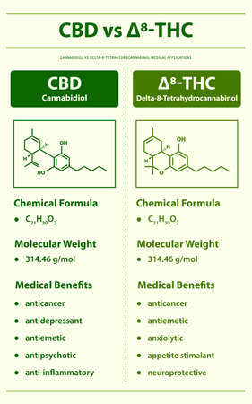 CBD vs ∆8-THC, Cannabdiol vs Delta 8 Tetrahydrocannabinol vertical infographic illustration about cannabis as herbal alternative medicine and chemical therapy, healthcare and medical science vector.