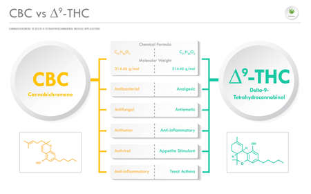 CBC vs ∆9-THC, Cannabichromene vs Delta 8 Tetrahydrocannabinol horizontal business infographic illustration about cannabis as herbal alternative medicine and chemical therapy, healthcare and medical science vector.