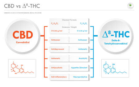 CBD vs ∆8-THC, Cannabichromene vs Delta 8 Tetrahydrocannabinol business infographic illustration about cannabis as herbal alternative medicine and chemical therapy, healthcare and medical science vector.