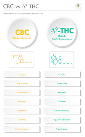 CBC vs ∆9-THC, Cannabichromene vs Delta 9 Tetrahydrocannabinol vertical business infographic illustration about cannabis as herbal alternative medicine and chemical therapy, healthcare and medical science vector. 矢量图像