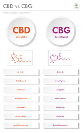 CBD vs CBG, Cannabidiol vs Cannabigerol vertical business infographic illustration about cannabis as herbal alternative medicine and chemical therapy, healthcare and medical science vector.