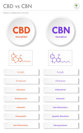 CBD vs CBN, Cannabidiol vs Cannabinol vertical business infographic illustration about cannabis as herbal alternative medicine and chemical therapy, healthcare and medical science vector. Ilustração