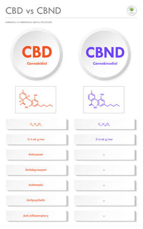 CBD vs CBND, Cannabidiol vs Cannabinodiol vertical business infographic illustration about cannabis as herbal alternative medicine and chemical therapy, healthcare and medical science vector. Ilustração