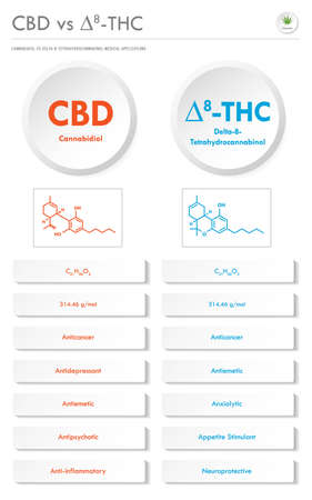 CBD vs ∆8-THC, Cannabidiol vs Delta 8 Tetrahydrocannabinol vertical business infographic illustration about cannabis as herbal alternative medicine and chemical therapy, healthcare and medical science vector. 矢量图像