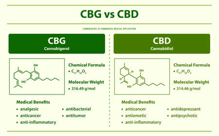 CBL vs CBD, Cannabicyclol vs Cannabidiol horizontal infographic illustration about cannabis as herbal alternative medicine and chemical therapy, healthcare and medical science vector.