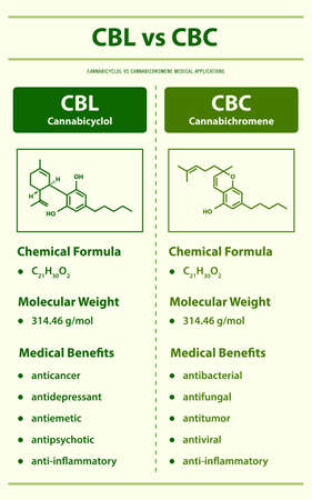 CBL vs CBD, Cannabicyclol vs Cannabidiol vertical infographic illustration about cannabis as herbal alternative medicine and chemical therapy, healthcare and medical science vector. 版權商用圖片 - 166211103
