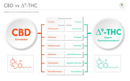 CBD vs ∆9-THC, Cannabichromene vs Delta 9 Tetrahydrocannabinol business infographic illustration about cannabis as herbal alternative medicine and chemical therapy, healthcare and medical science vector.