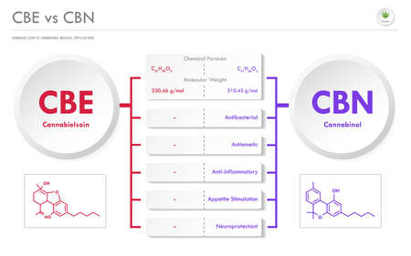 CBE vs CBN, Cannabielsoin vs Cannabinol horizontal business infographic illustration about cannabis as herbal alternative medicine and chemical therapy, healthcare and medical science vector.