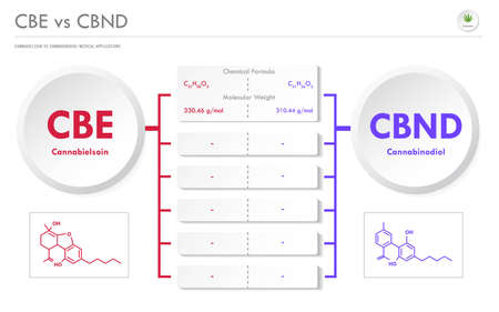 CBE vs CBND, Cannabielsoin vs Cannabinodiol horizontal business infographic illustration about cannabis as herbal alternative medicine and chemical therapy, healthcare and medical science vector.