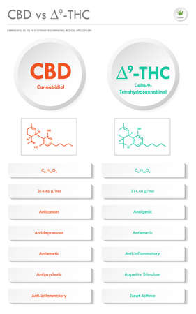 CBD vs ∆9-THC, Cannabidiol vs Delta 9 Tetrahydrocannabinol vertical business infographic illustration about cannabis as herbal alternative medicine and chemical therapy, healthcare and medical science vector.