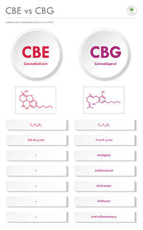 CBE vs CBG, Cannabielsoin vs Cannabigerol vertical business infographic illustration about cannabis as herbal alternative medicine and chemical therapy, healthcare and medical science vector.