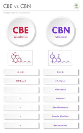 CBE vs CBN, Cannabielsoin vs Cannabinol vertical business infographic illustration about cannabis as herbal alternative medicine and chemical therapy, healthcare and medical science vector. 矢量图像