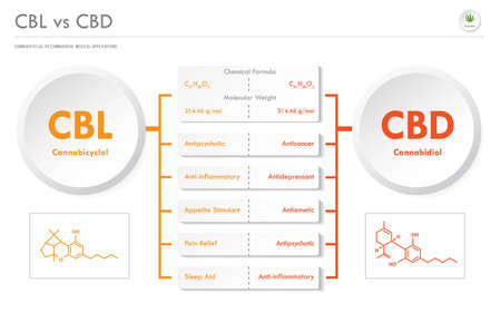 CBL vs CBD, Cannabicyclol vs Cannabidiol horizontal business infographic illustration about cannabis as herbal alternative medicine and chemical therapy, healthcare and medical science vector.