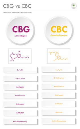 CBL vs CBD, Cannabicyclol vs Cannabidiol vertical business infographic illustration about cannabis as herbal alternative medicine and chemical therapy, healthcare and medical science vector. Illusztráció