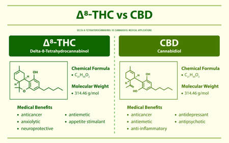 ∆8-THC vs CBD, Delta 8 Tetrahydrocannabinol vs Cannabidiol horizontal infographic illustration about cannabis as herbal alternative medicine and chemical therapy, healthcare and medical science vector.