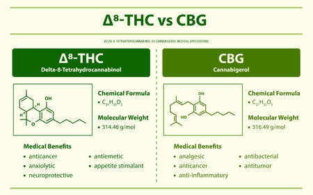 ∆8-THC vs CBG, Delta 8 Tetrahydrocannabinol vs Cannabigerol horizontal infographic illustration about cannabis as herbal alternative medicine and chemical therapy, healthcare and medical science vector.