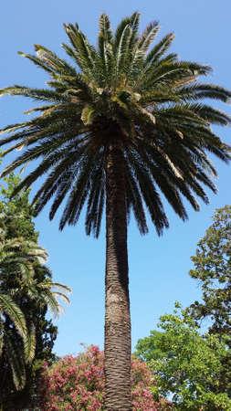 palm Reklamní fotografie - 82277959