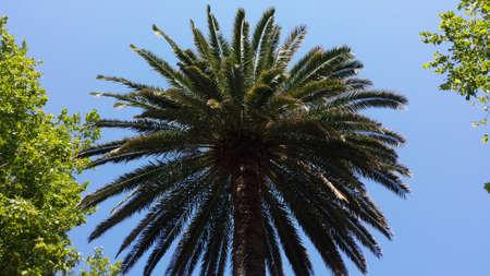 palm tree Reklamní fotografie - 84342232