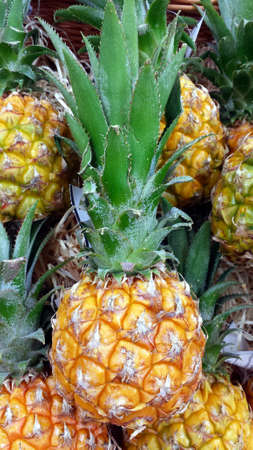 Small pineapples. A few small, whole pineapples. Photo up close