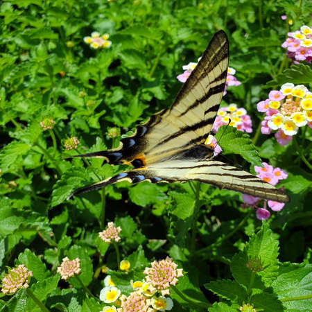Butterfly is sitting on yellow pink small flowers. Closeup.