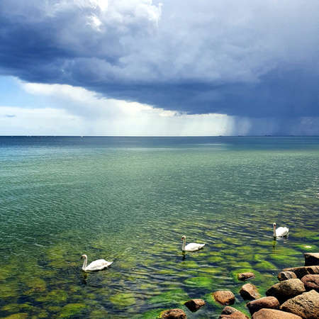 Storm clouds over the sea. Swans fleeing from the rain.