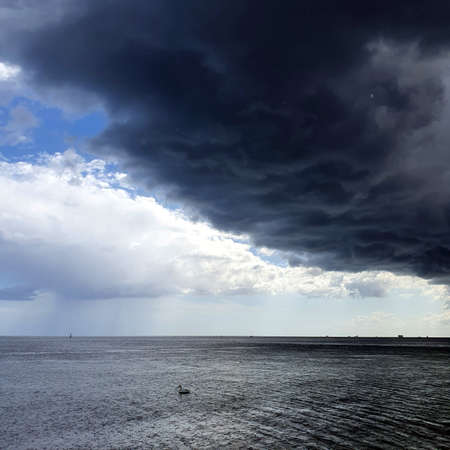 Storm clouds over the sea. Swan fleeing from the rain.