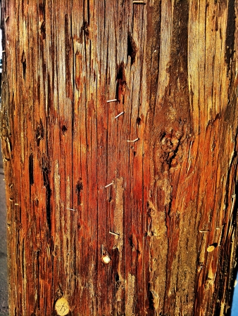 Close up of electric post with staples from publicity Stock Photo