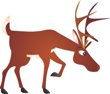 Deer vector Vector