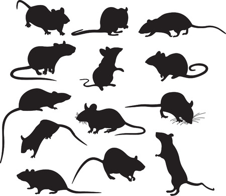 rodents: Mouses vector Illustration