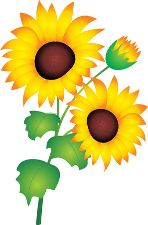 stamens: Sunflower vector