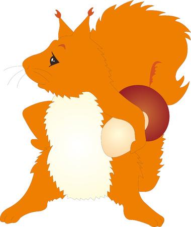 Squirrel vector Vector