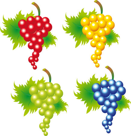 Grape Stock Vector - 5910377