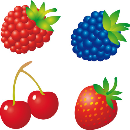 exoticism: Berry Illustration