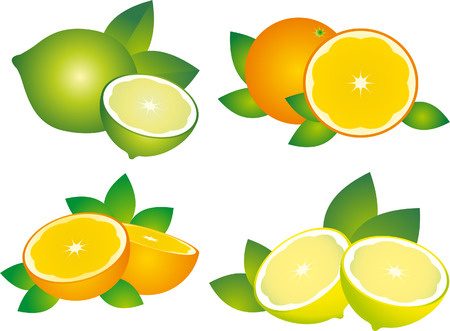 citric: Citrus vector