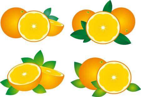 Orange vector  Vector
