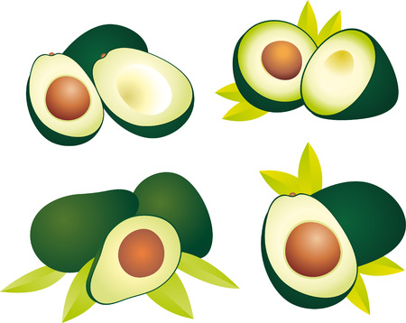 avocados: Avocado Illustration