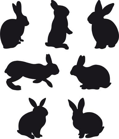 conejo: Conejo Vectores