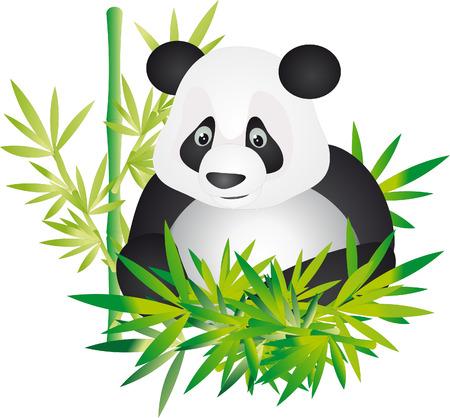 wildlife reserve: Panda  Illustration