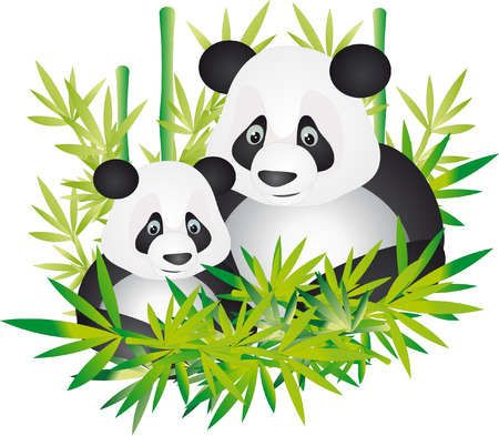 bamboo leaves: Panda