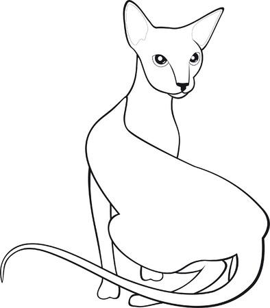 sphinx: Gatto  Vettoriali