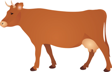 one animal: Cow vwctor Illustration